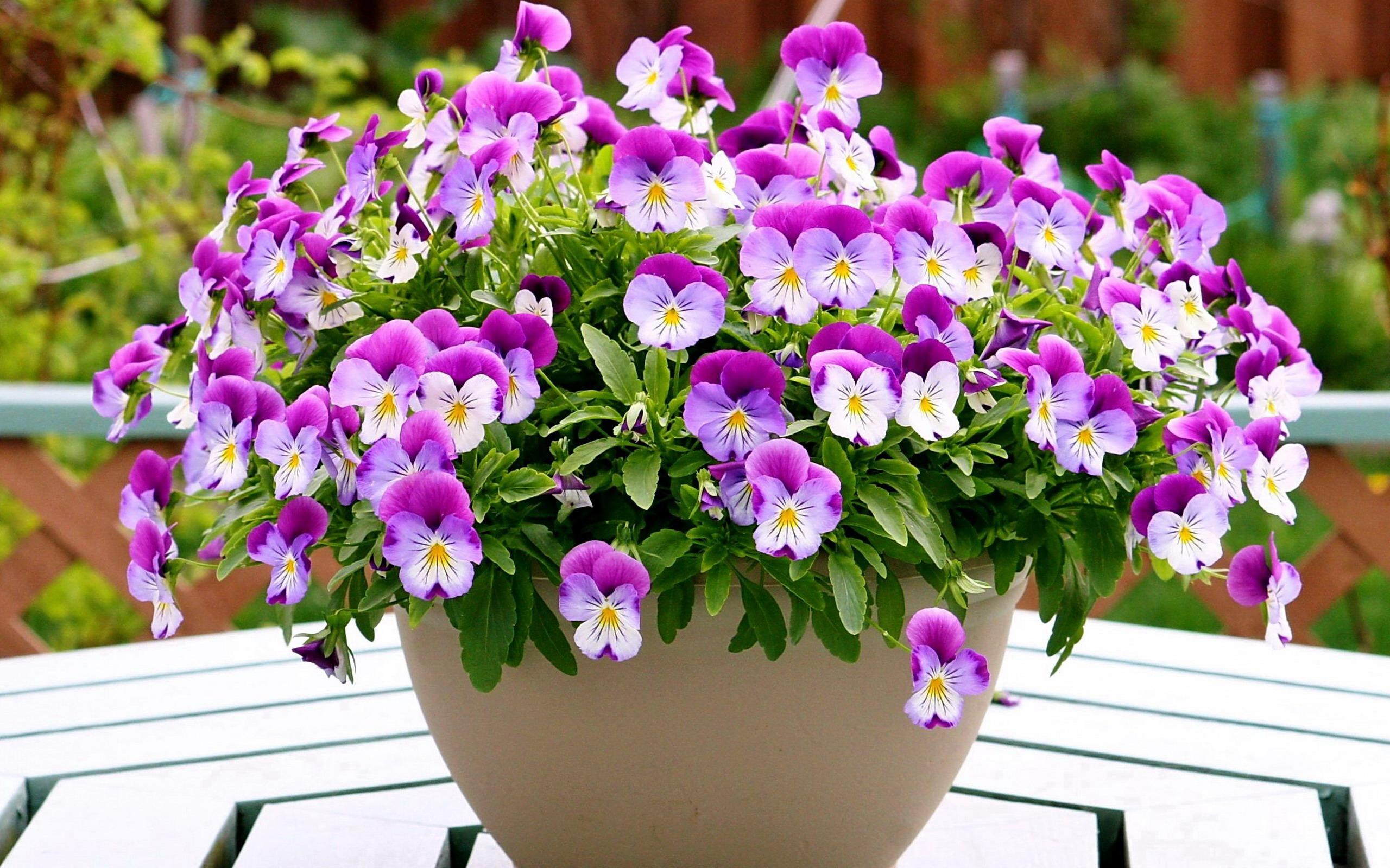 Cчитает домашние цветы в горшке одним из самых позитивных знаков, которые только могут присниться.