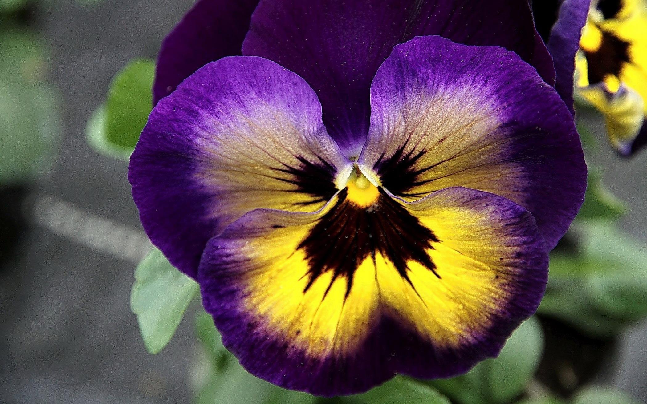 Цветы фото картинки букеты