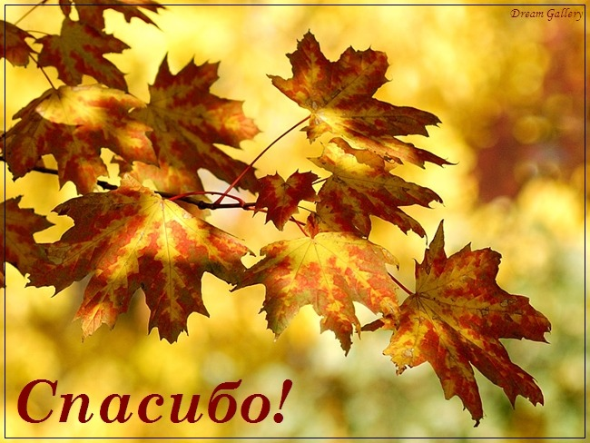 Картинки канитель осенних листьев