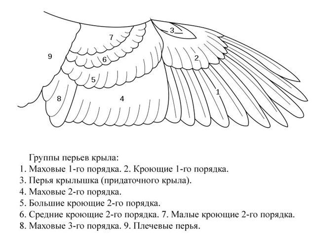 http://4put.ru/pictures/max/762/2342238.jpg