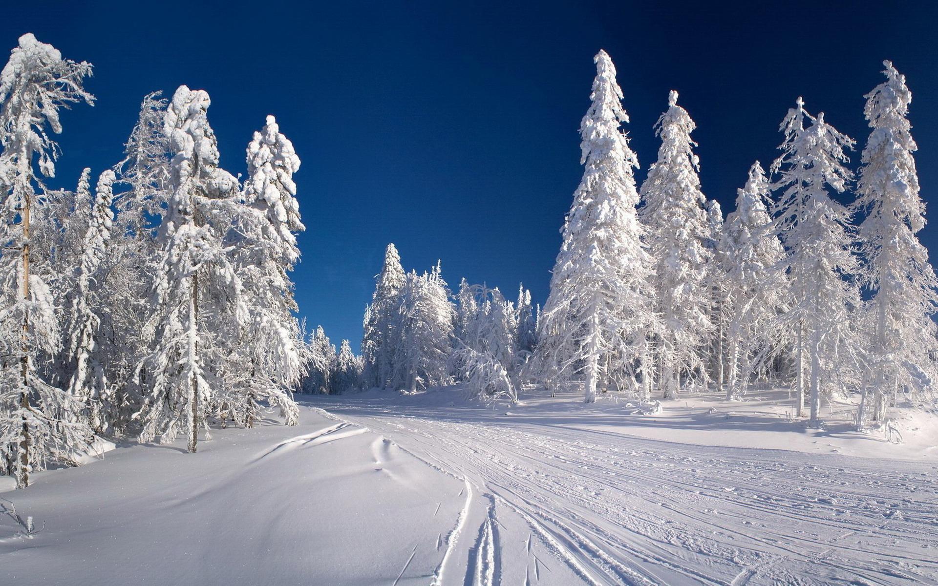 Живые обои Зима для windows 1087