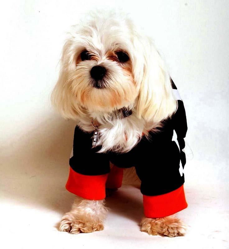 Карнавальные костюмы для собак