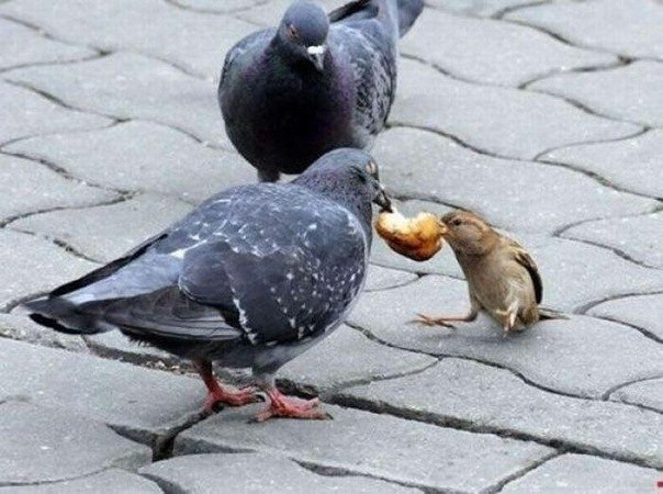 воробей хлебных крошек не клюешь