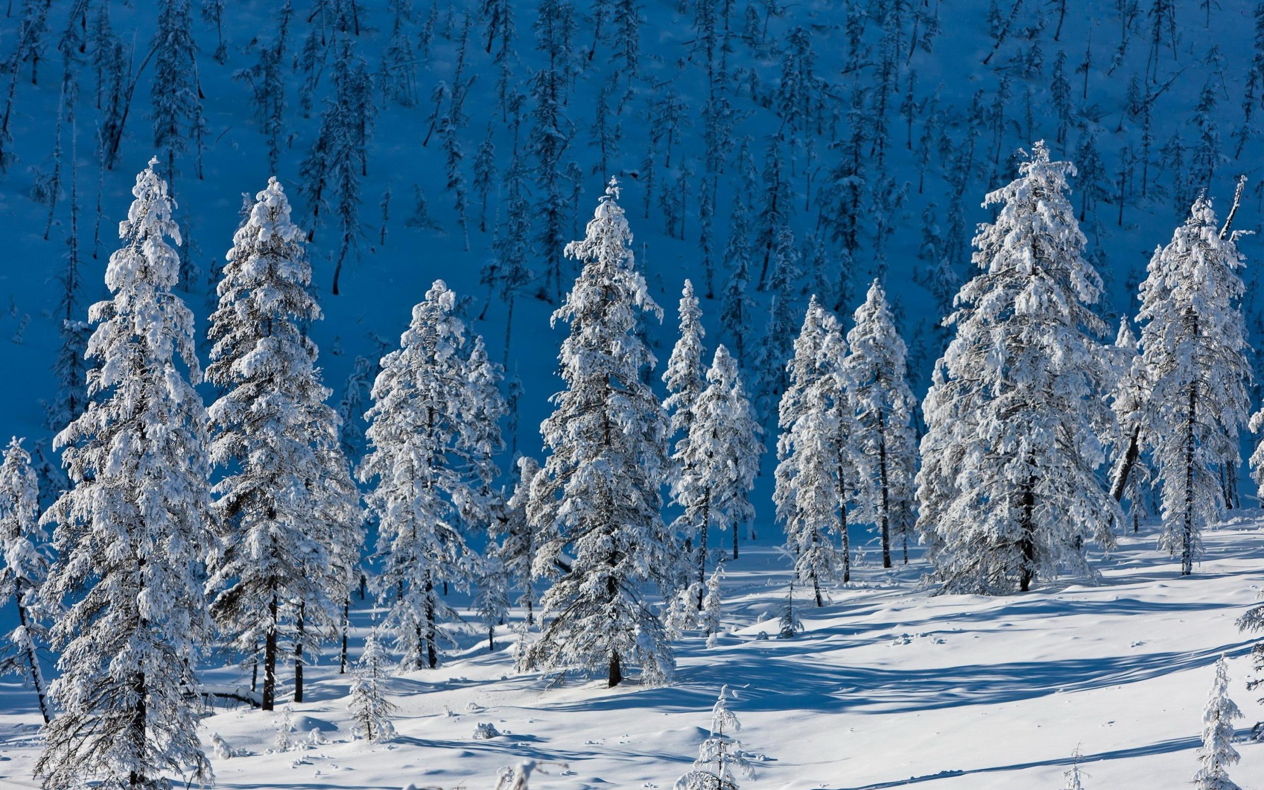 Зима фото большого размера 2