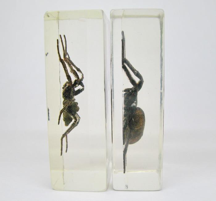 Насекомые №2 - Паук крестовик (Araneus sp.)