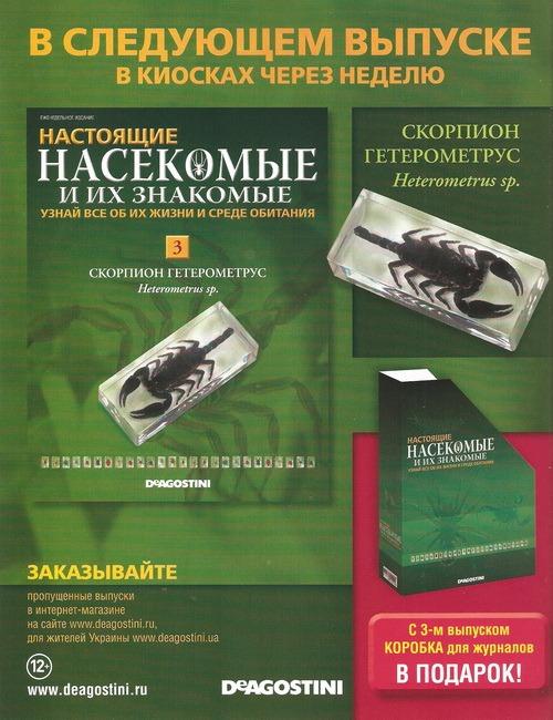 Насекомые №3 - Скорпион гетерометрус (Heterometrus sp.)