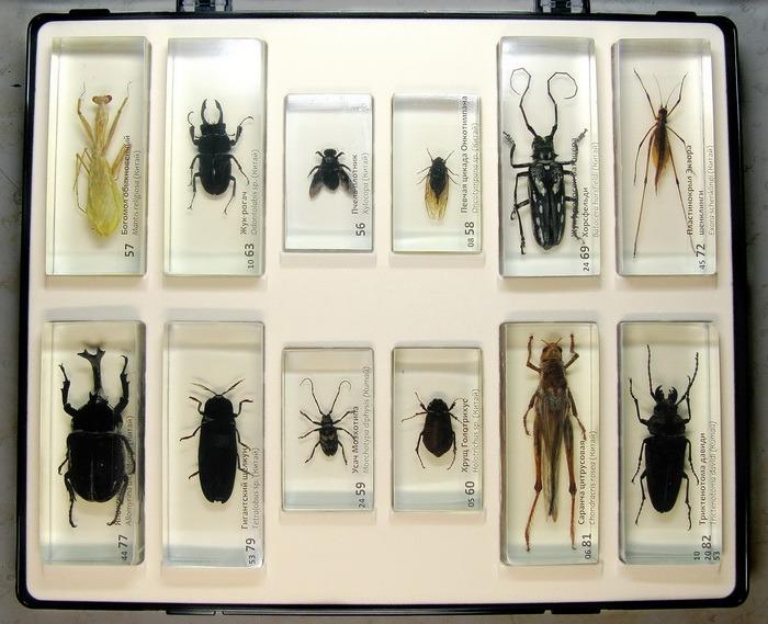 насекомые и их знакомые
