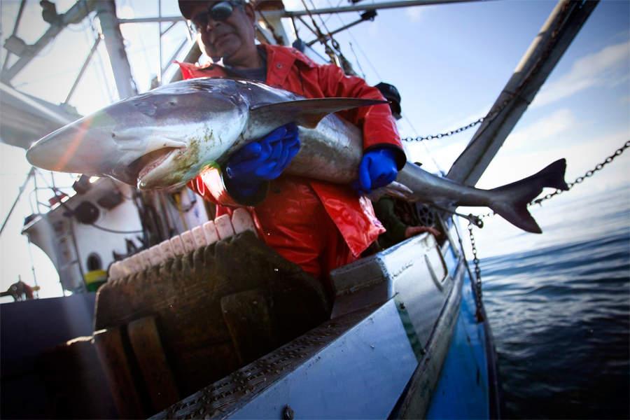 фильм про рыболовный флот