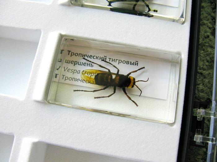 насекомые и их знакомые 2014