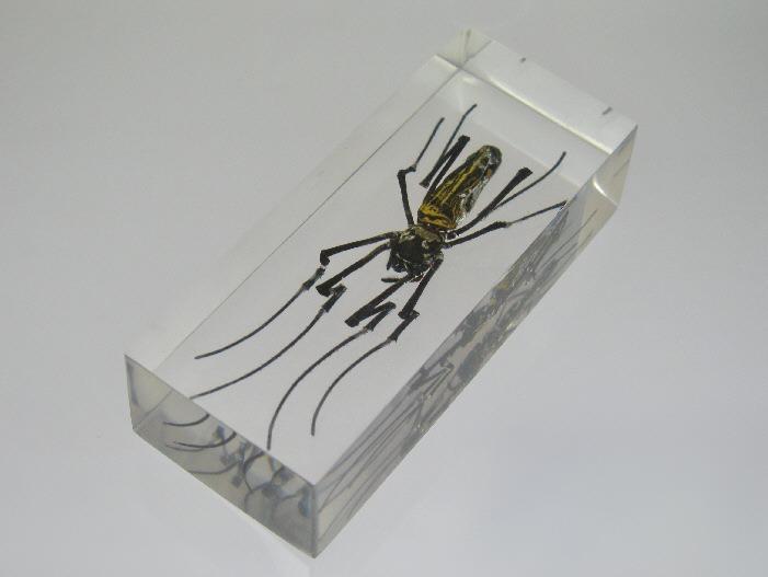Насекомые №27 Золотой Кругопряд (Nephila sp.) фото, обсуждение