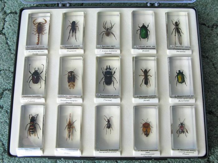 заказать все выпуски насекомые и их знакомые