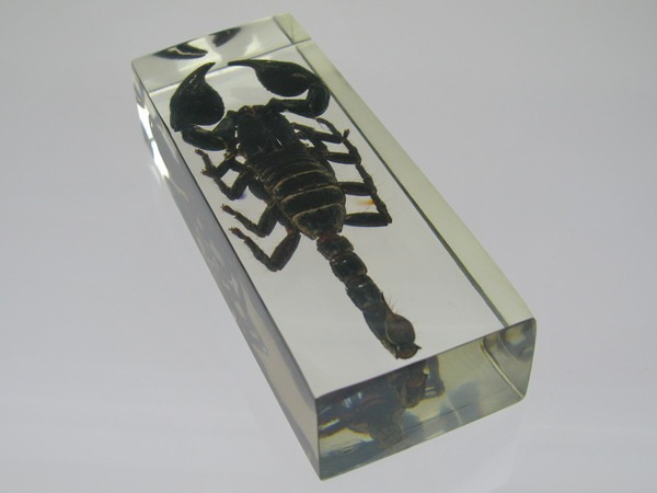 Насекомые №3 Скорпион Гетерометрус (Heterometrus sp.) Фото