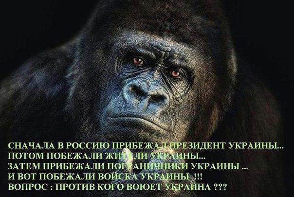 http://4put.ru/pictures/max/960/2950156.jpg
