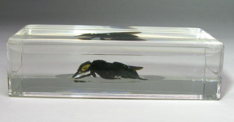 Насекомые №32 - Пчела - листорез (Megachilidae)