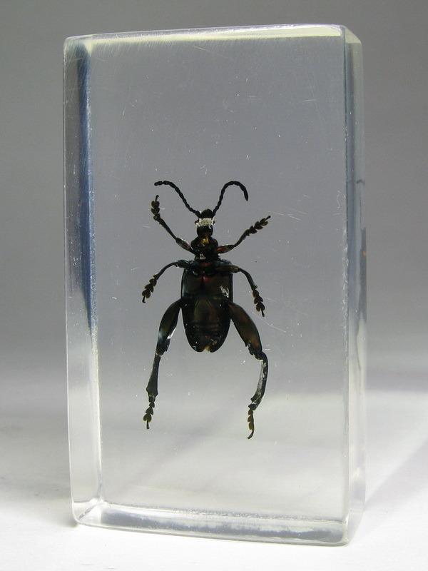 Насекомые №34 - Листоед-прыгун (Sagra femorata)