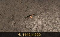 400490.jpg