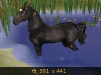 Лошади, и все, что с ними связано 532078