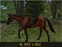 Лошади, и все, что с ними связано 532090