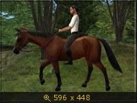 Лошади, и все, что с ними связано 532091