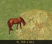 Лошади, и все, что с ними связано 532126