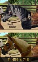 Лошади, и все, что с ними связано 648016