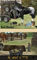 Лошади, и все, что с ними связано 648029